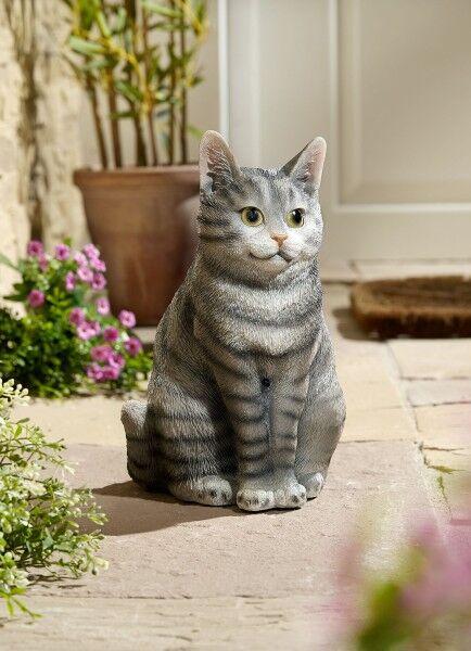 Bewegungsmelder Katze grau